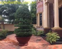 Cho thuê biệt thự đường Trần Ngọc Diện Thảo Điền