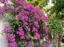 Biệt thự đẹp khu biệt thự cao cấp Kim Sơn Thảo Điền Quận 2