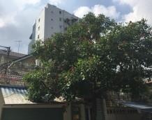 Bán biệt thự đường Lê Ngô Cát Quận 3