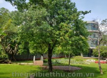 Cho thuê biệt thự đẹp đường 6 Thảo Điền view sông Thảo Điền