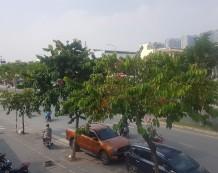 Bán đất thương mại mặt tiền đường Quang Trung Gò Vấp 2915m2